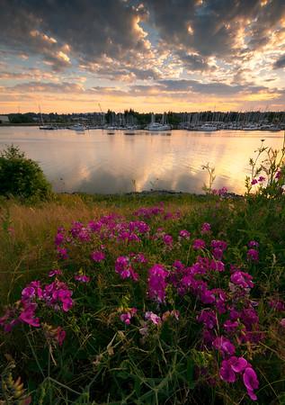 Sunset Pinks Over Olympia Marina - Olympia, Washington