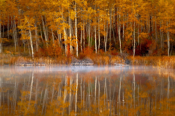 Autumn Moments Reflected In Pond - Methow Valley, Washington State