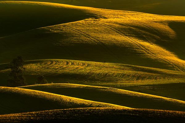 Hillsides Painted In Gold - Eid Road, Palouse, Idaho