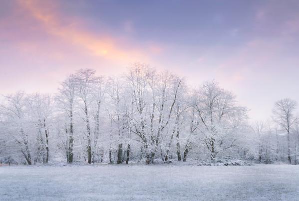 Snow Frost Trees Pinks - Olympia, WA