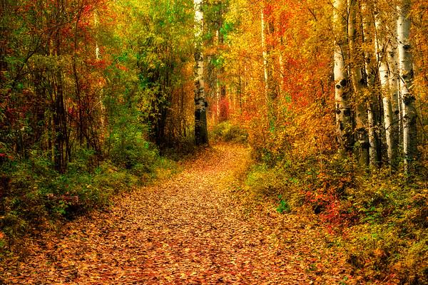 A Walk Through Autumn Moments - Methow Valley, Washington State