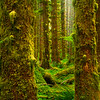Sneak Look Into The Moody Forest - Black Forest, Olympic National Park, WA