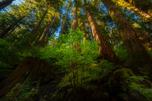 At The Base Of The Guards - Sol Duc Falls, Olympic National Park, WA