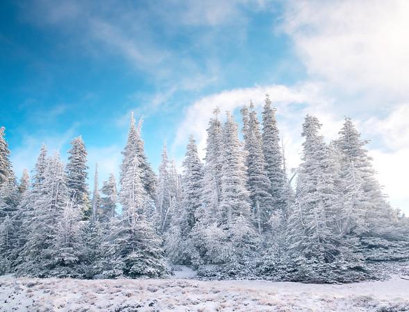 Winter Frosting On Top - Hurricane Ridge, Olympic National Park, WA