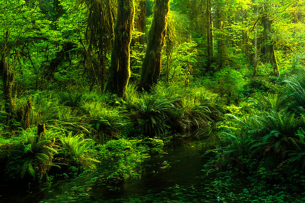 Forest Fairy Tale Of Greenery - Hoh Rainforest, Olympic National Park, WA