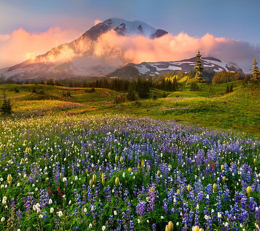 The Fog Is Finally Lifting - -  Mazama Ridge, Mount Rainier National Park, Washington St.