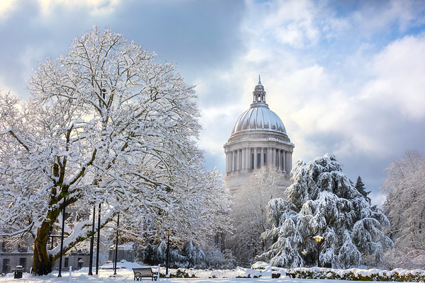 Capital Building Framed In Snow By The Lone Tree