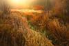 Fall Color Trail - Cle Elum, Washington