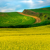 Skip Into Different Colors - Stern Road, Garfield, Palouse, WA