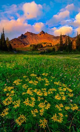 Wildflower Meadows Of Snow Grass Flats _Goat Rocks Wilderness, Gifford Pinchot SP_WA_