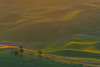 The First Golden Light - Steptoe Butte State Park, The Palouse, Eastern Washington