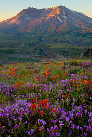 Down Into The Valley Of Color - Mount St Helens Volcanic Monument,  Washington State