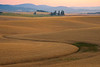 The Curves Of Harvest Time