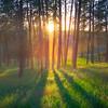 Sun Rays Through Tree Forest -The Palouse, Eastern Washington And Western Idaho