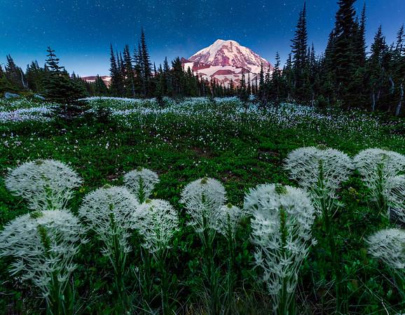 Nightime Skies With Beargras - Spray Park,  Mount Rainier National Park, Washington