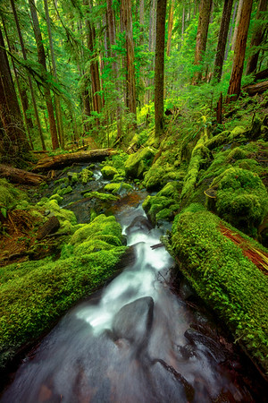 Looking Down The Barrell Sol Duc Falls, Olympic National Park, WA