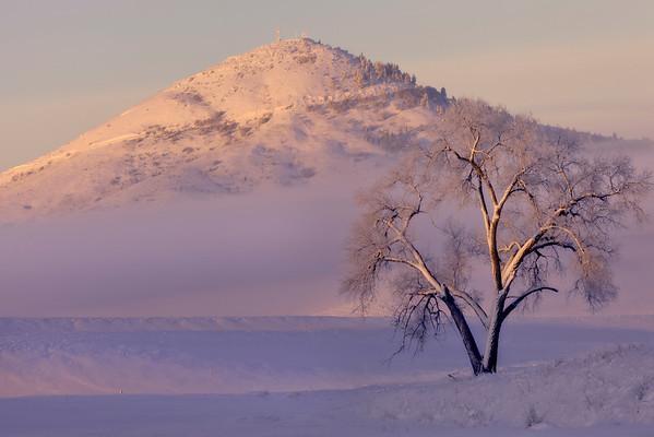 Frozen Sunrise - The Palouse, Eastern Washington