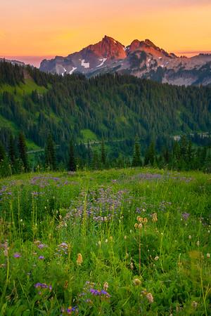 Tatoosh Twilight And Purple - Paradise Meadows, Mt Rainier NP, WA
