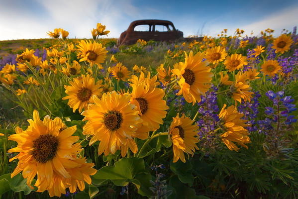Left Behind - The Dalles, Washington