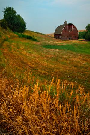 Follow The Yellow Wheat Road - Palouse, Eastern Washington