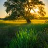 The Lone Tree And SunStar -The Palouse, Eastern Washington And Western Idaho
