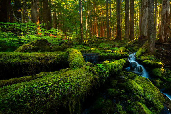 Leading Lines Into The Stream - Sol Duc Falls, Olympic National Park, WA
