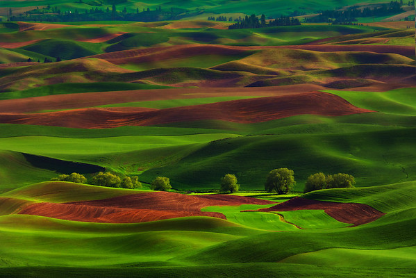 A Row Of Trees From Steptoe - Steptoe Butte State Park, Washington