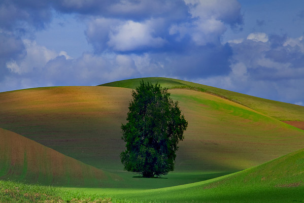 All By Myself Amongst The Giants - The Palouse,  Washington