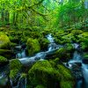 Converging Cascade Streams In The Sol Duc Sol Duc Falls, Olympic National Park, WA