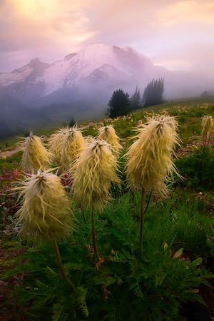 Fog Rolling By Rainier - Yakima Park, Mt Rainier NP, WA