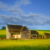 Webber House In Canola - The Palouse Region, Washington
