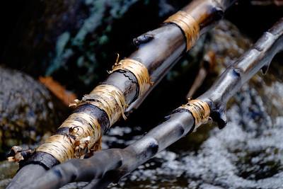 Fallen birch in waterfall
