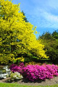 University of  Washington Arboretum 2015