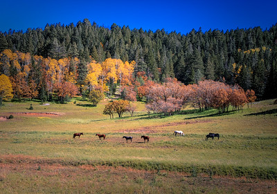 Horses in the Autumn