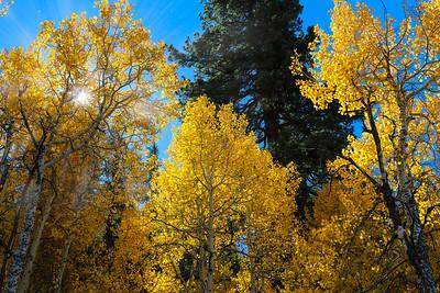 Fall Foliage in the Rockies