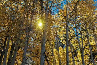 Sunburst through the Aspens