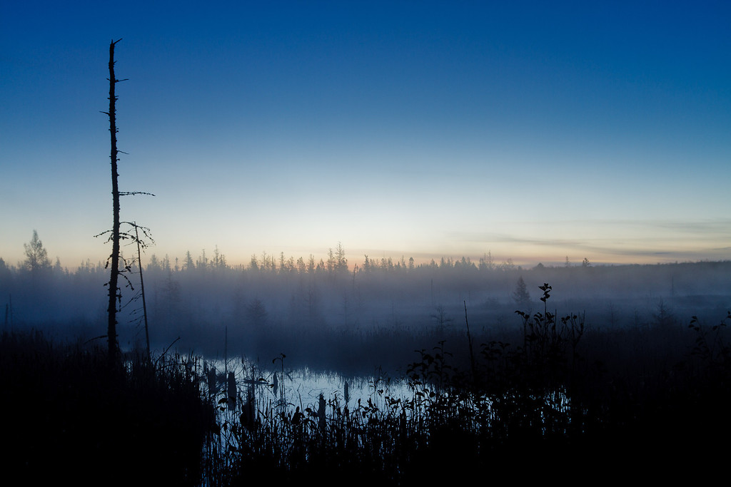 Early morning fog covers a wetland area at dawn (south of Covington MI along Hwy 141).