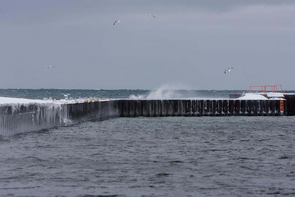 Gulls riding the wind.