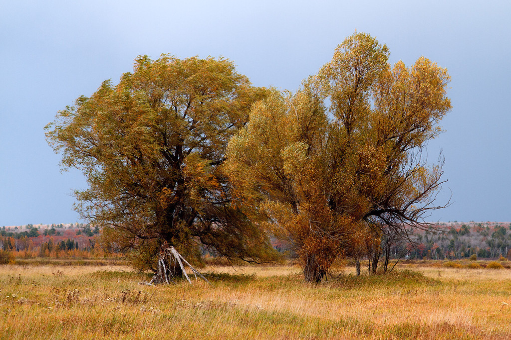 Fall color at the Sturgeon River Sloughs near Chassell MI.