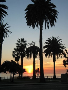 Santa Monica 1157 (32978999)