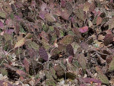 Cool purple cactus.