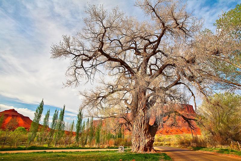Utah, Moab, Canyonland, Spring Landscape, 犹他, 摩押