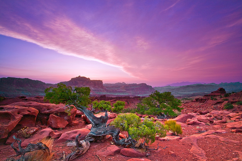 Utah, Capitol Reef National Park, Canyon, Red rocks, Sunrise Landscape, 犹他, 圆顶礁国家公园 沙漠, 风景