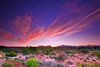 Utah, Arches National Park, the windows, Sunrise Landscape, 犹他,  拱门国家公园