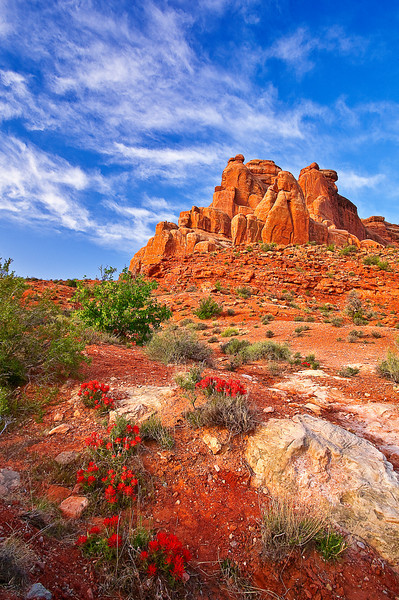 Utah, Arches National Park, wild flowers Landscape, 犹他,  拱门国家公园 沙漠, 风景