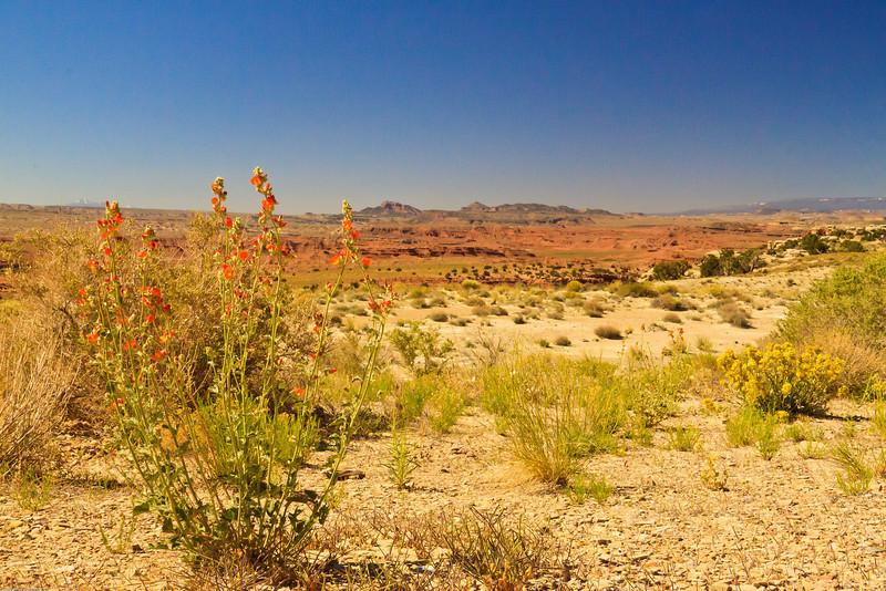 A landscape taken June 11, 2011 near Green River, UT.