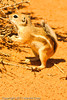 A Squirrel taken Aug. 26, 2011 at  Arches National Park near Moab, Utah.