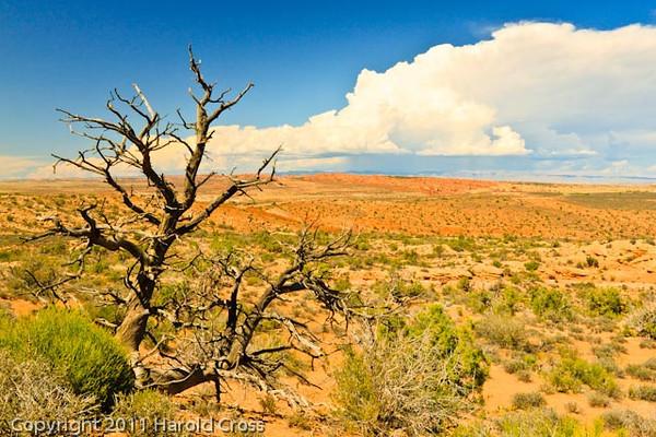 A landscape taken Aug. 26, 2011 at  Arches National Park near Moab, Utah.