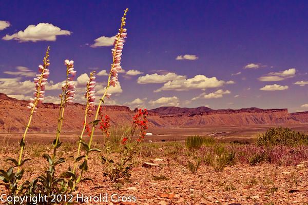 A landscape taken Jun. 1, 2010 near Moab, UT.