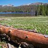 Trial Lake Meadows: The Uinta and Wastach mountains of Utah